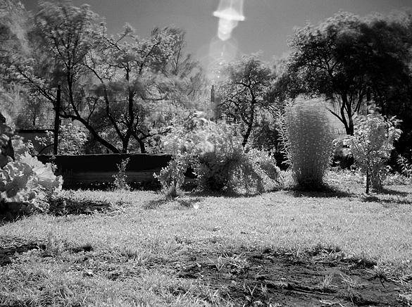 infrared dārzs