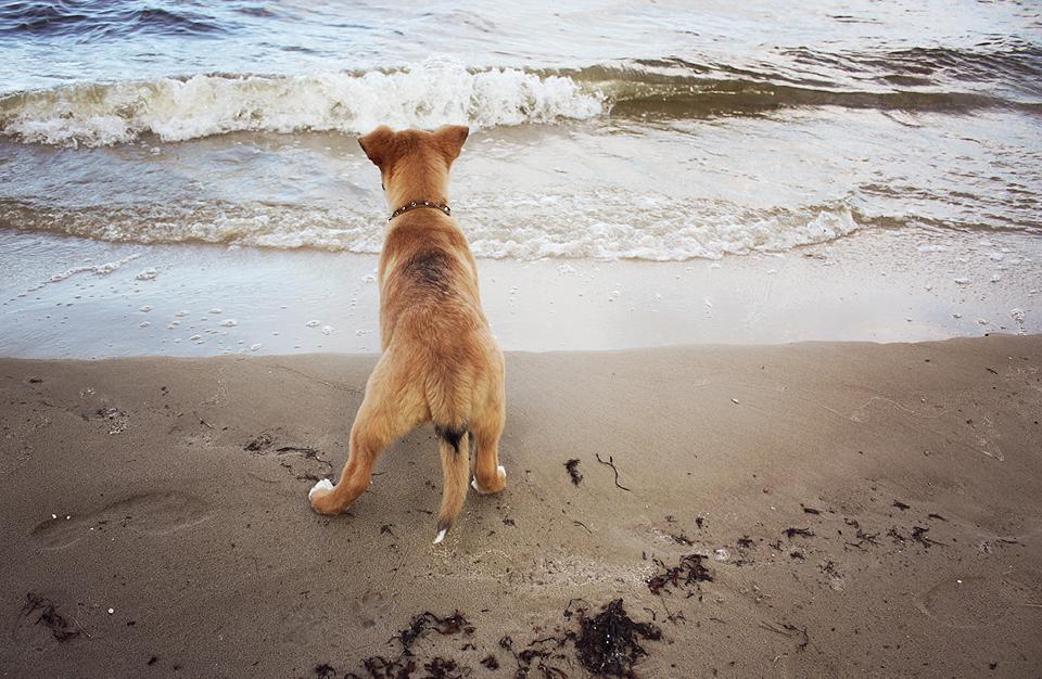 Lara iepazīstas ar jūru