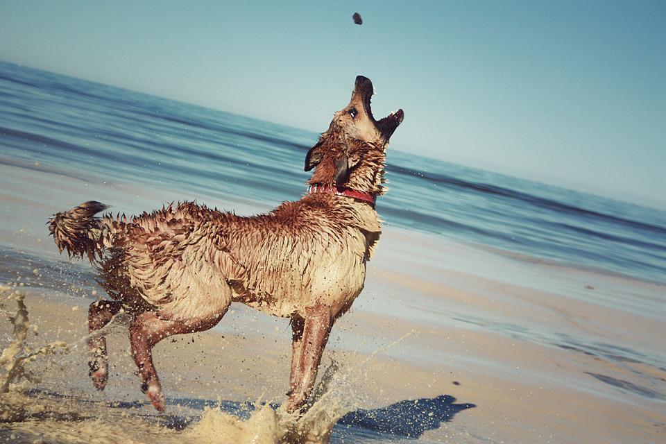 jūra zied un suns pa gaisu