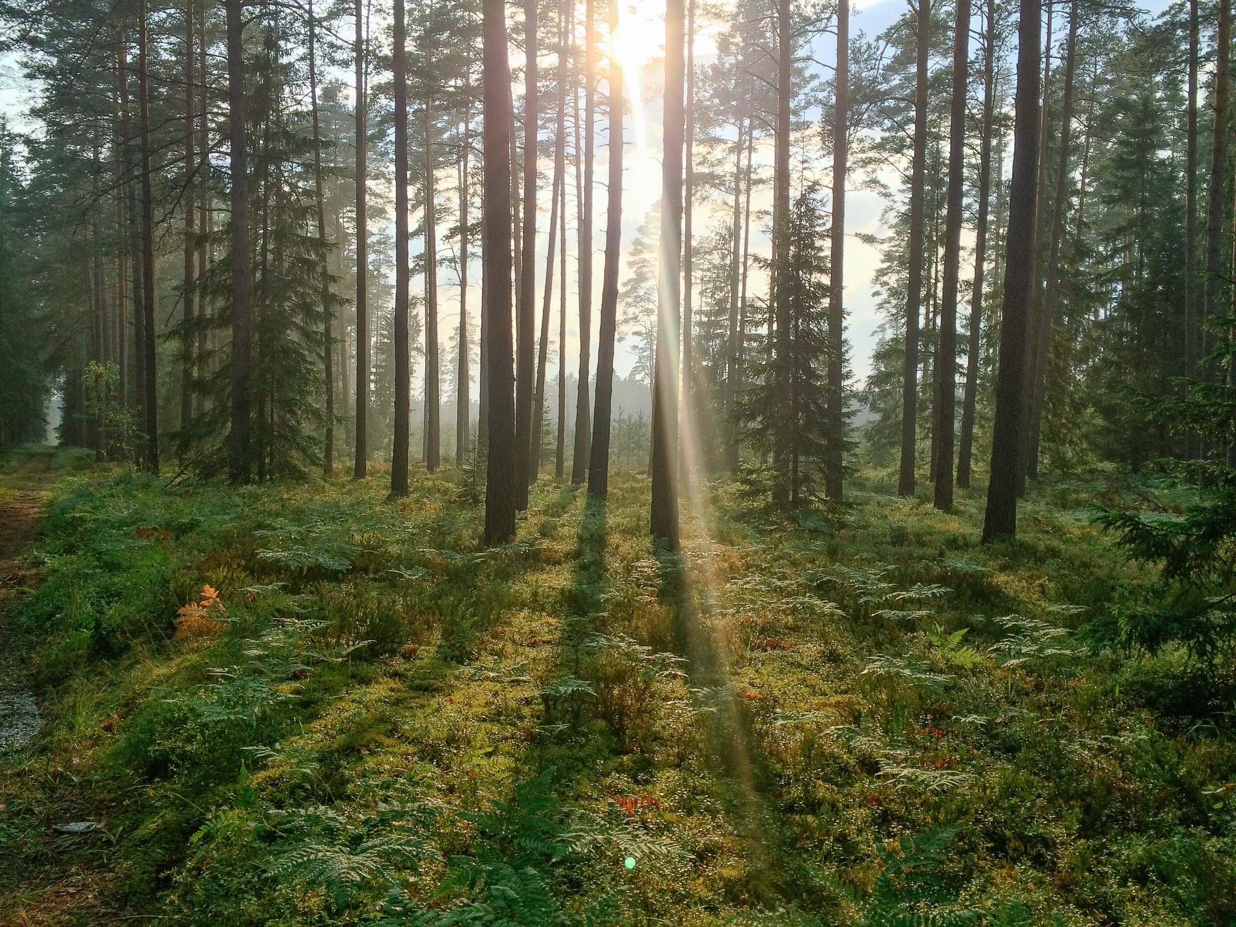 meža kadrs no 8. augusta skrējiena