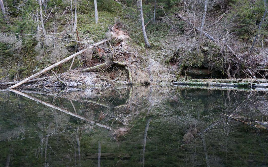 Cīrulīšu dabas taka
