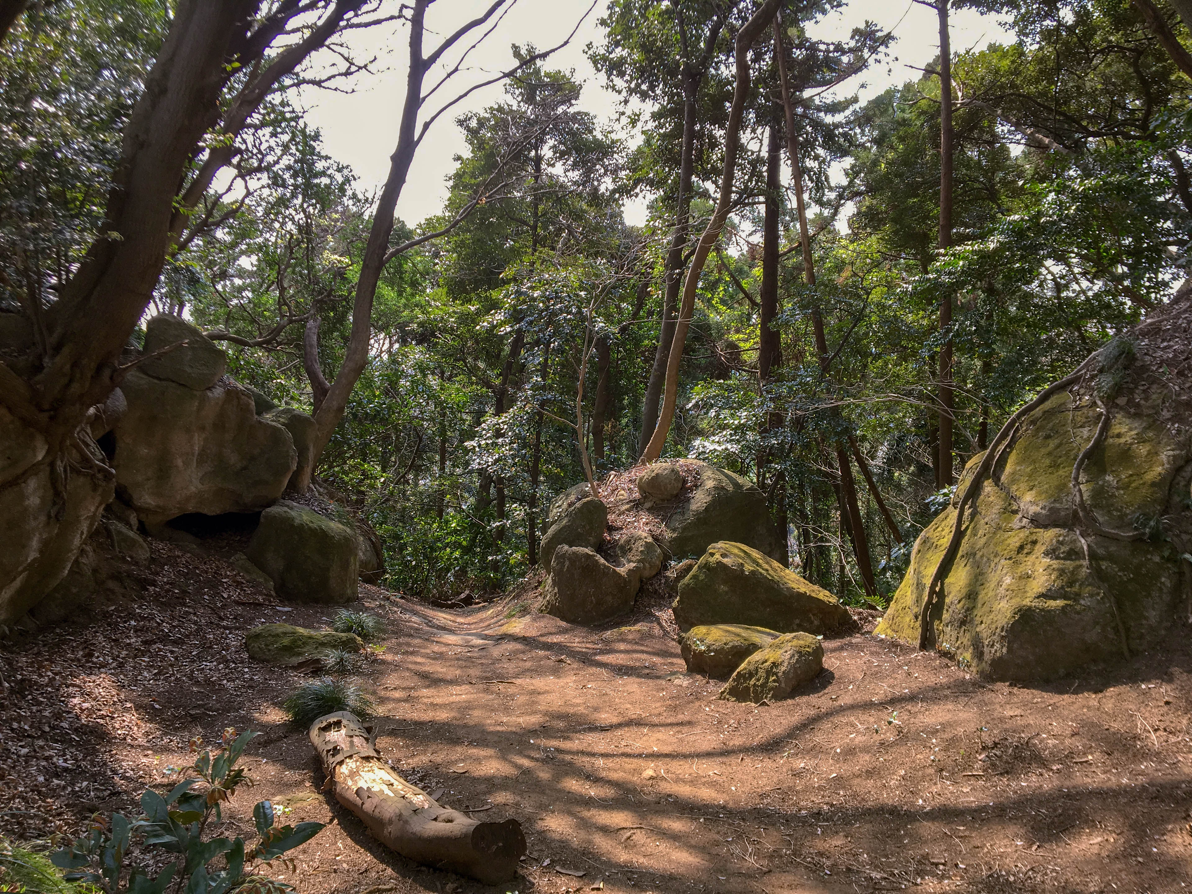 Kamakuras kalnu taku skrējiens: Konandai – Asaine Kiridoshi – Kamakura – Ofuna